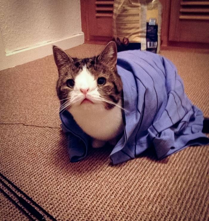 Monty, un gato que tiene sindrome de down 1