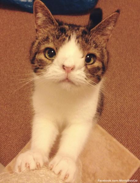 Monty, un gato que tiene sindrome de down 4