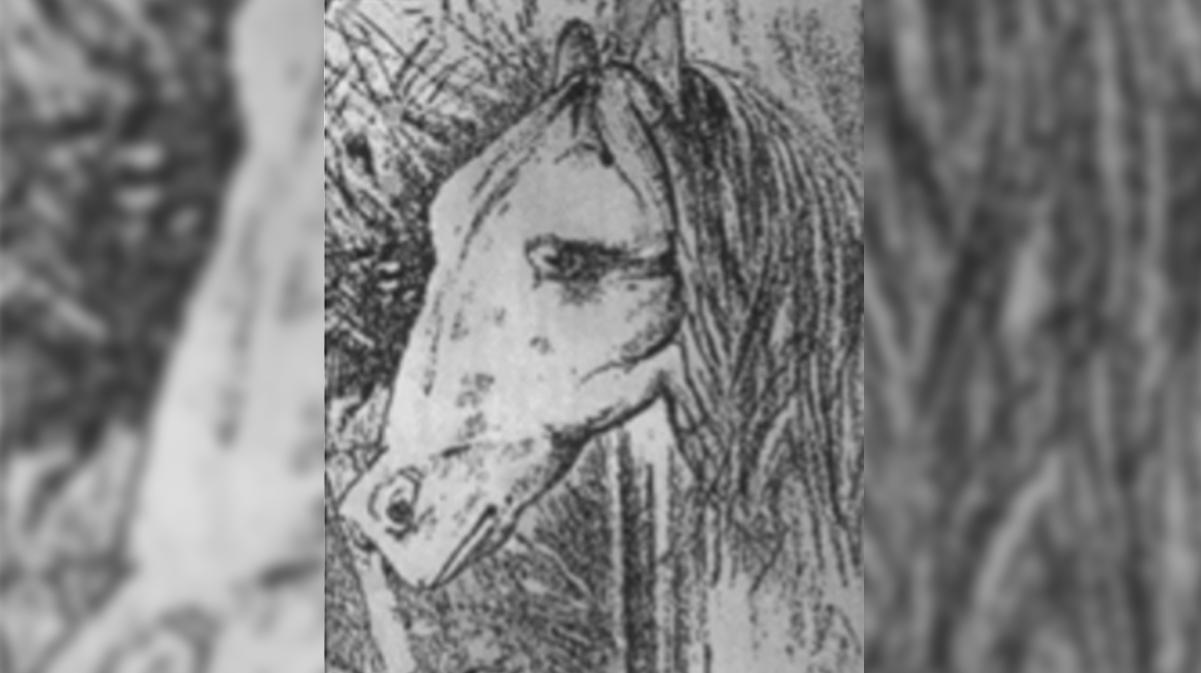 acertijo-caballo-rana