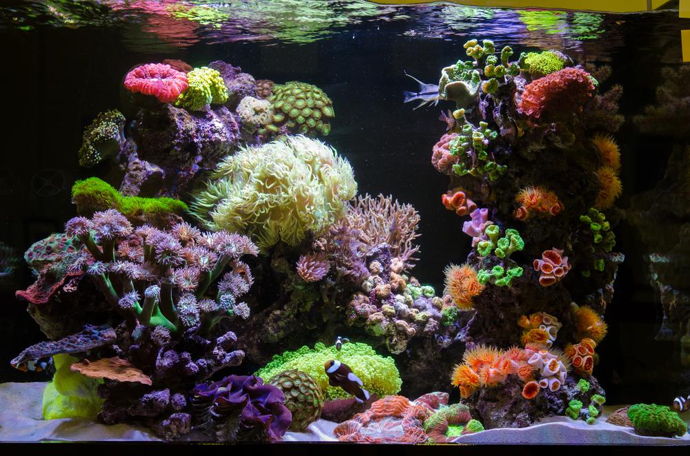 agua oxigenada13