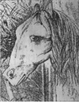 caballo y rana1