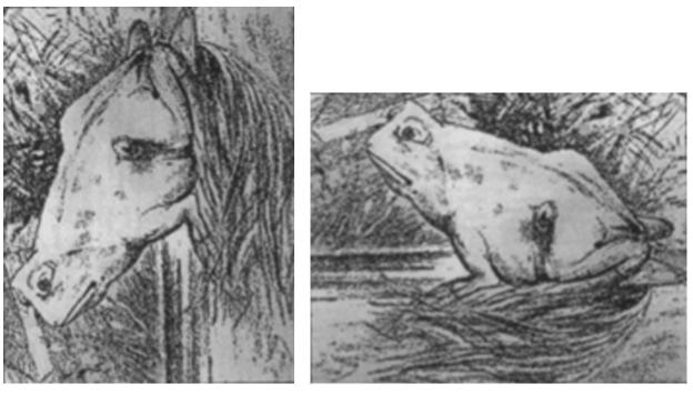 caballo y rana3