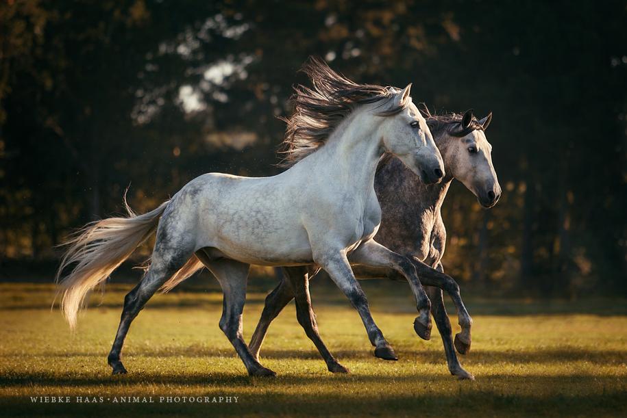 caballos fotos 1