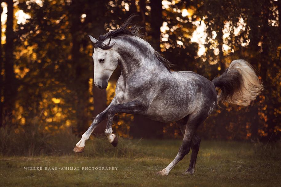 caballos fotos 2