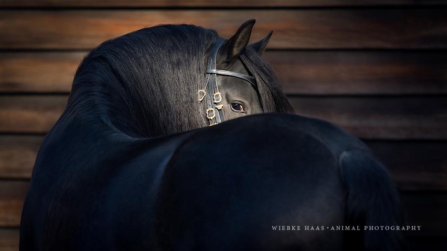 caballos fotos 3