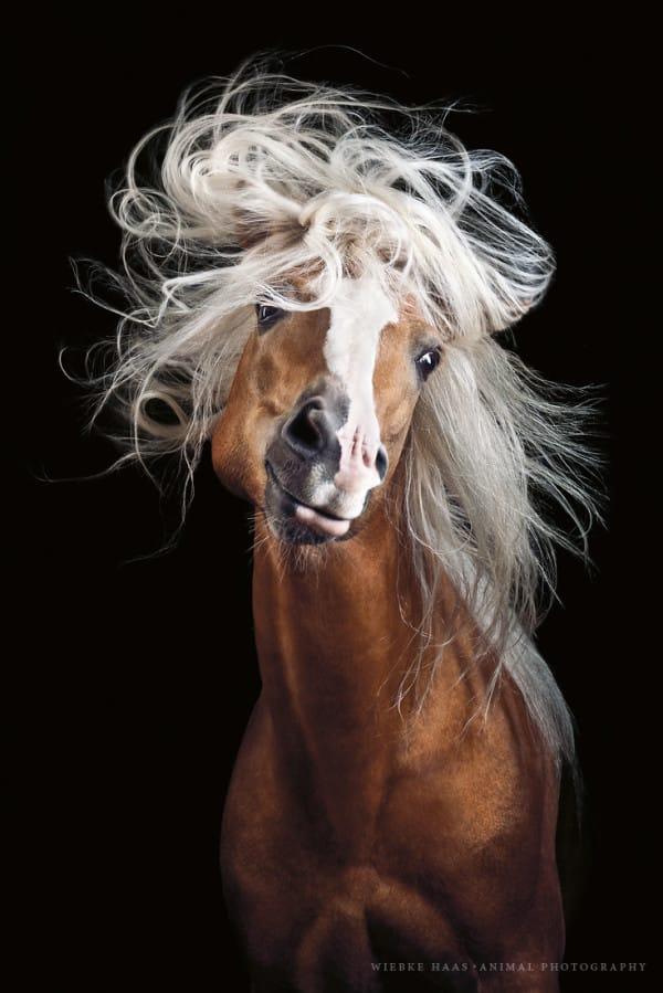 caballos modelo 1
