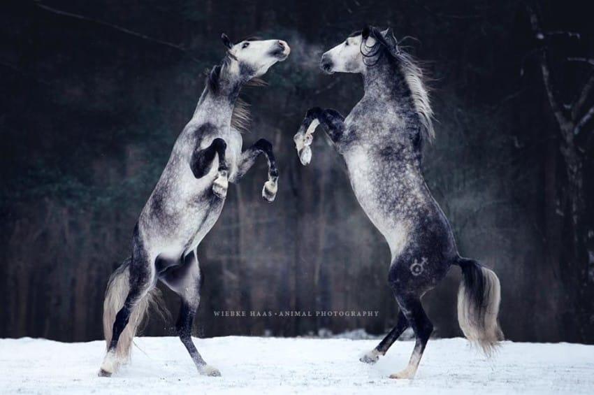caballos modelo 10