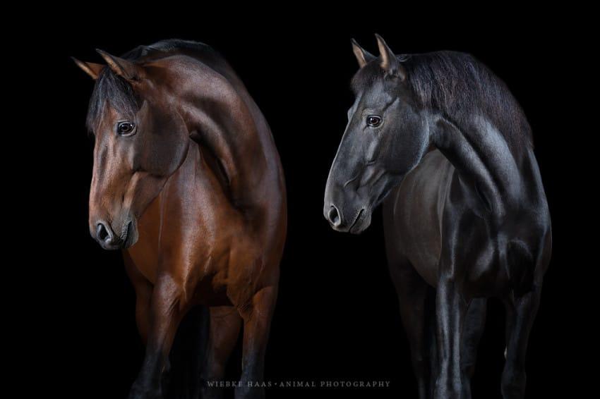 caballos modelo 2