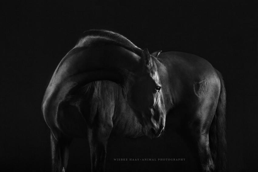 caballos modelo 3