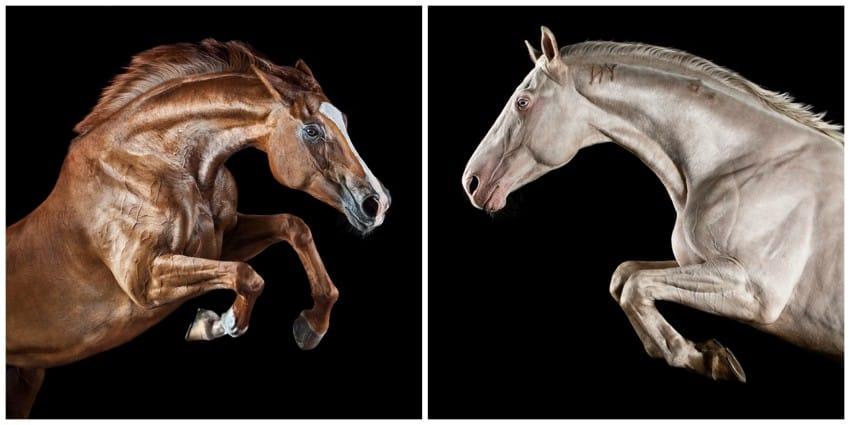 caballos modelo 4