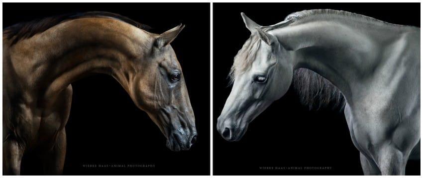 caballos modelo 7