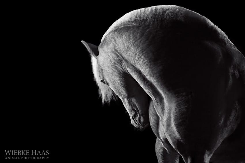 caballos modelo 8