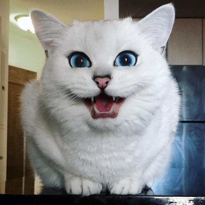 coby, el gato con los ojos azules mas bonitos que hemos visto nunca 11
