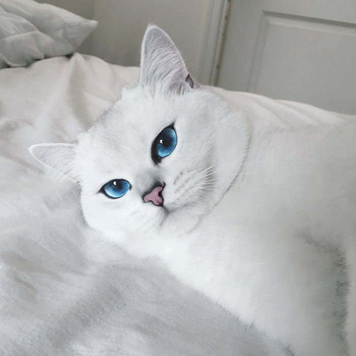 coby, el gato con los ojos azules mas bonitos que hemos visto nunca 12