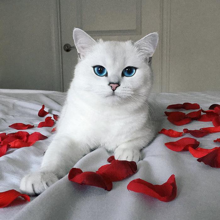 coby, el gato con los ojos azules mas bonitos que hemos visto nunca 13