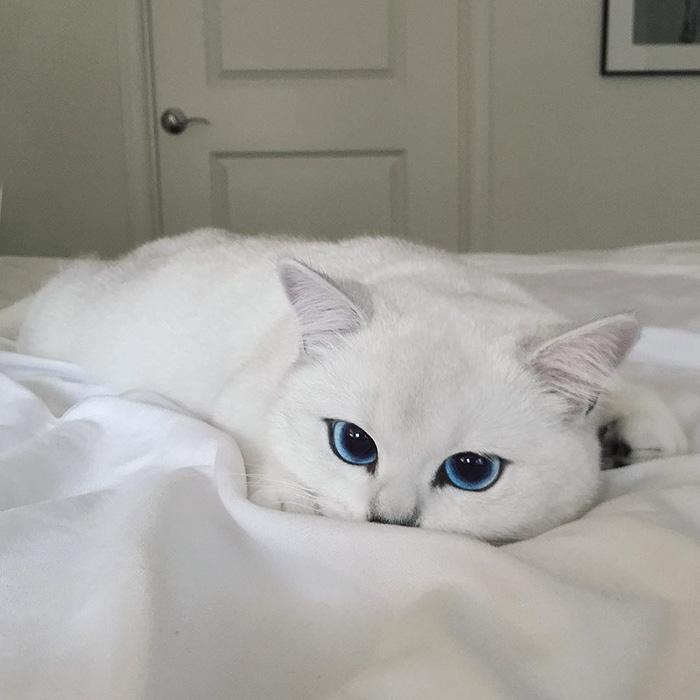 coby, el gato con los ojos azules mas bonitos que hemos visto nunca 4