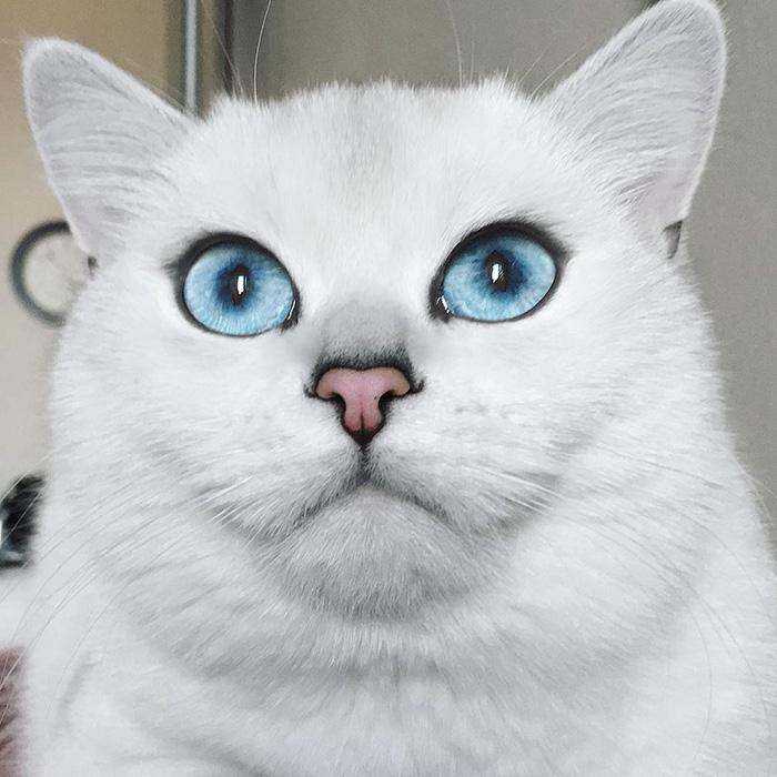 coby, el gato con los ojos azules mas bonitos que hemos visto nunca 6