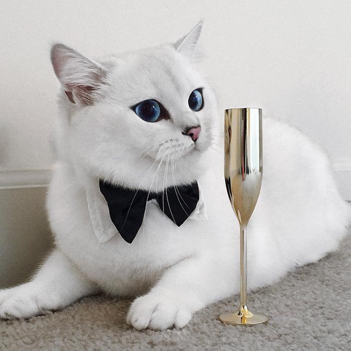 coby, el gato con los ojos azules mas bonitos que hemos visto nunca 7