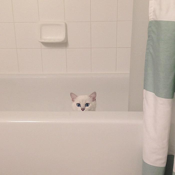 coby, el gato con los ojos azules mas bonitos que hemos visto nunca 8