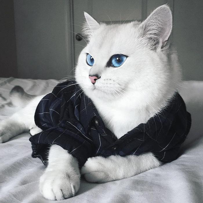 coby, el gato con los ojos azules mas bonitos que hemos visto nunca 9