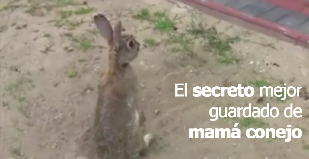el secreto mejor guardado de mama conejo