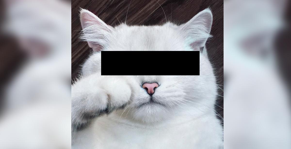 gato con ojos bonitos censored