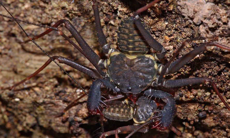 la araña que se está poniendo de moda como mascota 3