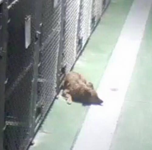 maggie en frente de la jaula