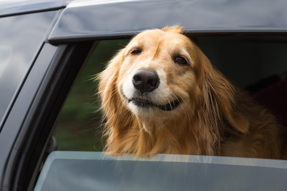 mi perro es feliz