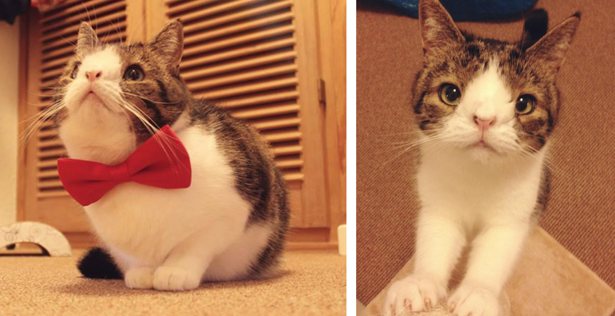 monty, el gato que tiene sindrome de down