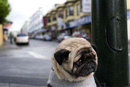 perro deprimido 15