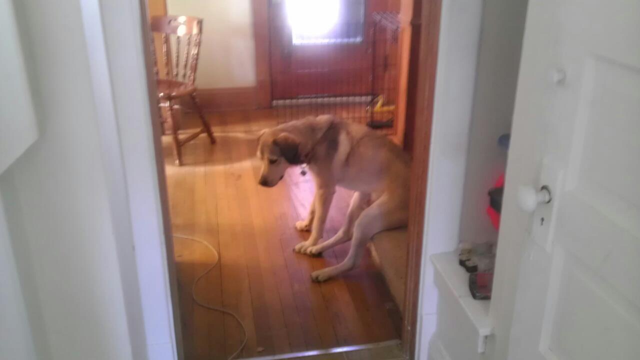 perro deprimido 16