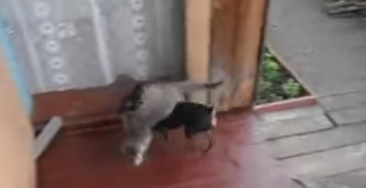 perro transporta a gato hasta su casa