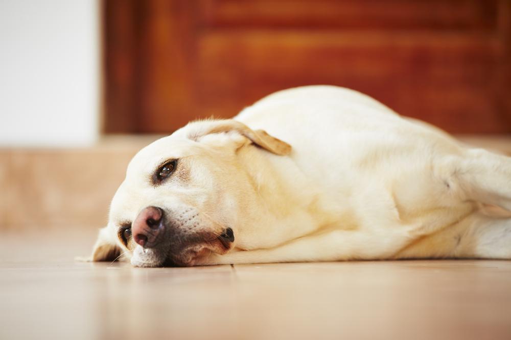 perro triste 1