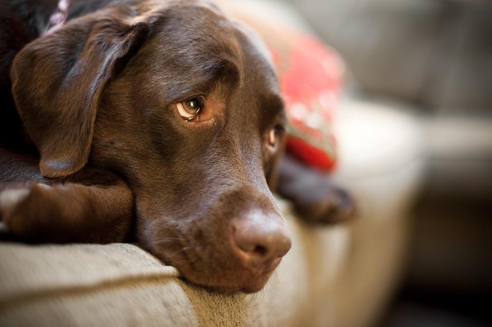perro triste 2