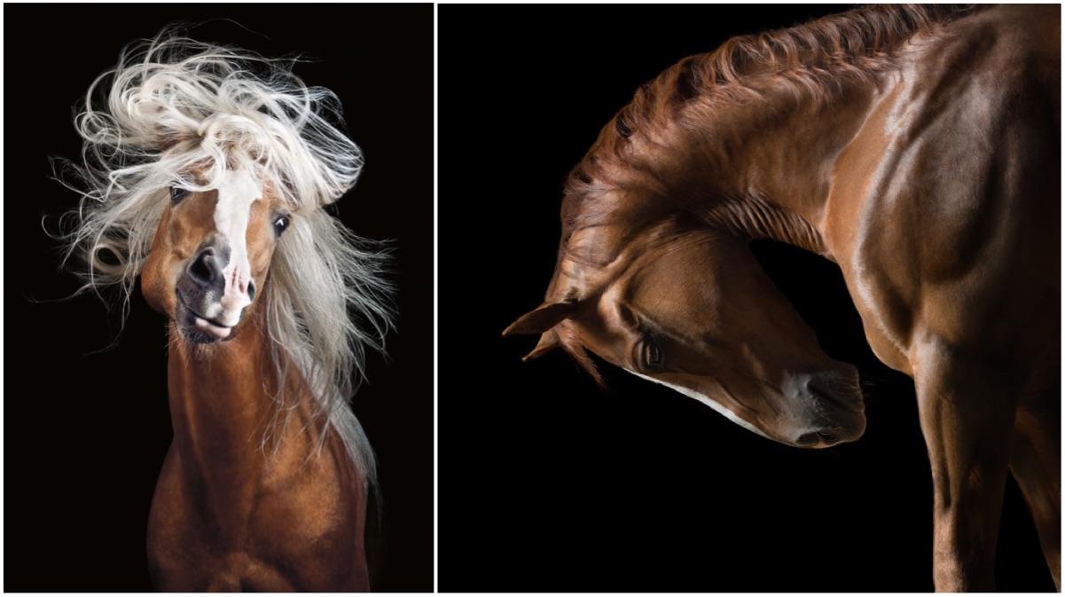 portada caballos