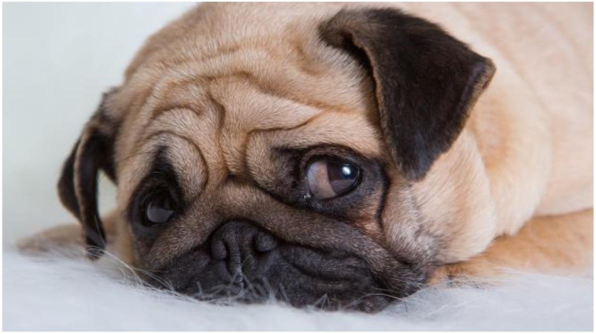 portada perro depresion