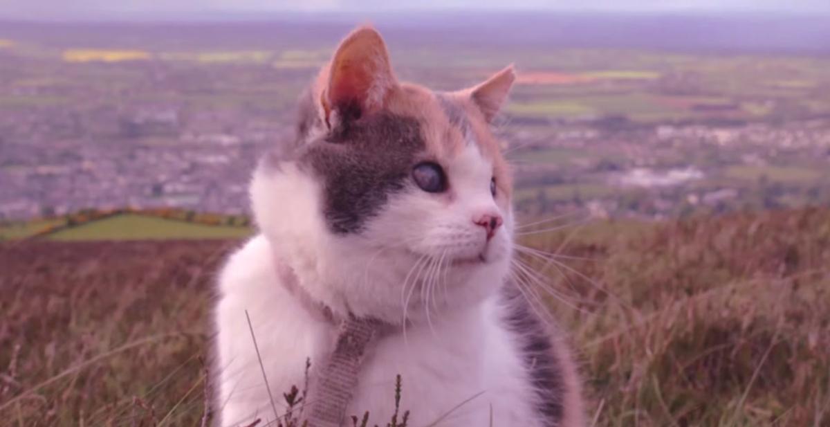 stevie la gata que escalo una montaña