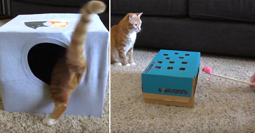 trucos-entretener-gatos