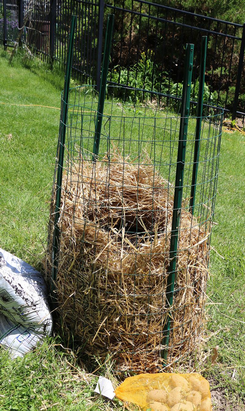como cultivar tus propias patatas en un espacio reducido 7