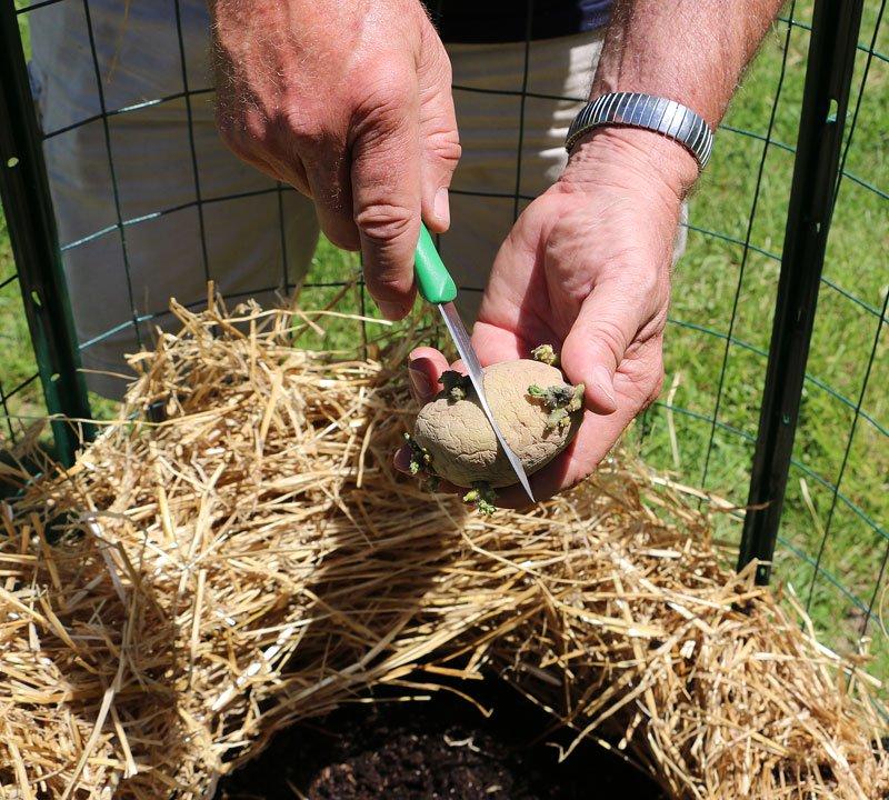 como cultivar tus propias patatas en un espacio reducido 8