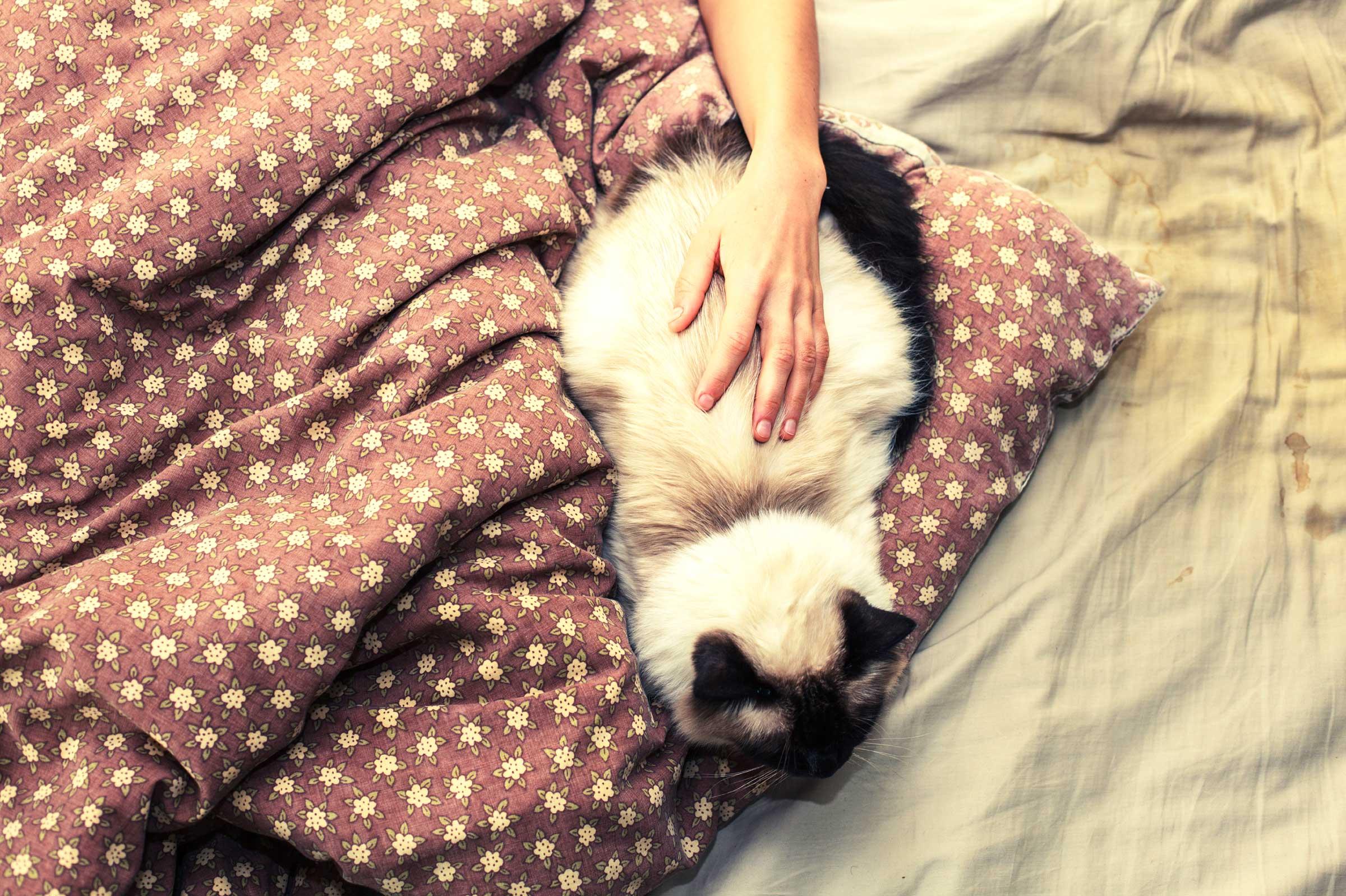 cosas que nuestras mascotas nos quieren decir pero no entendemos 10