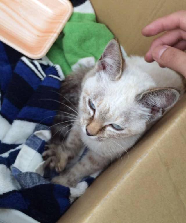 este gato eligio a su huano en un parque y se fue con el a casa 10