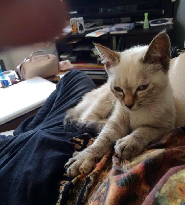 este gato eligio a su huano en un parque y se fue con el a casa 11