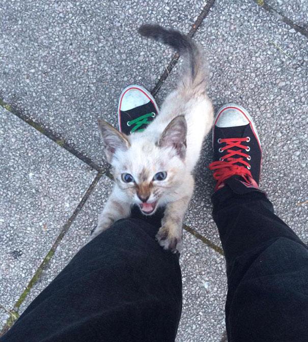 este gato eligio a su huano en un parque y se fue con el a casa 2
