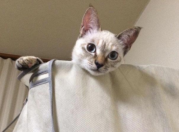 este gato eligio a su huano en un parque y se fue con el a casa 7