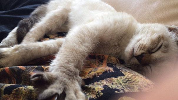 este gato eligio a su huano en un parque y se fue con el a casa 8