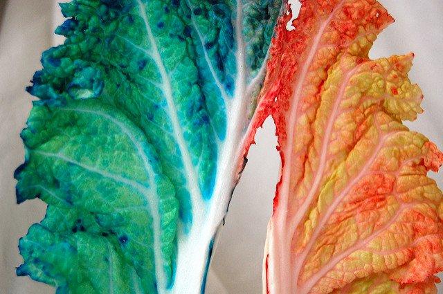 Teñir plantas de colores
