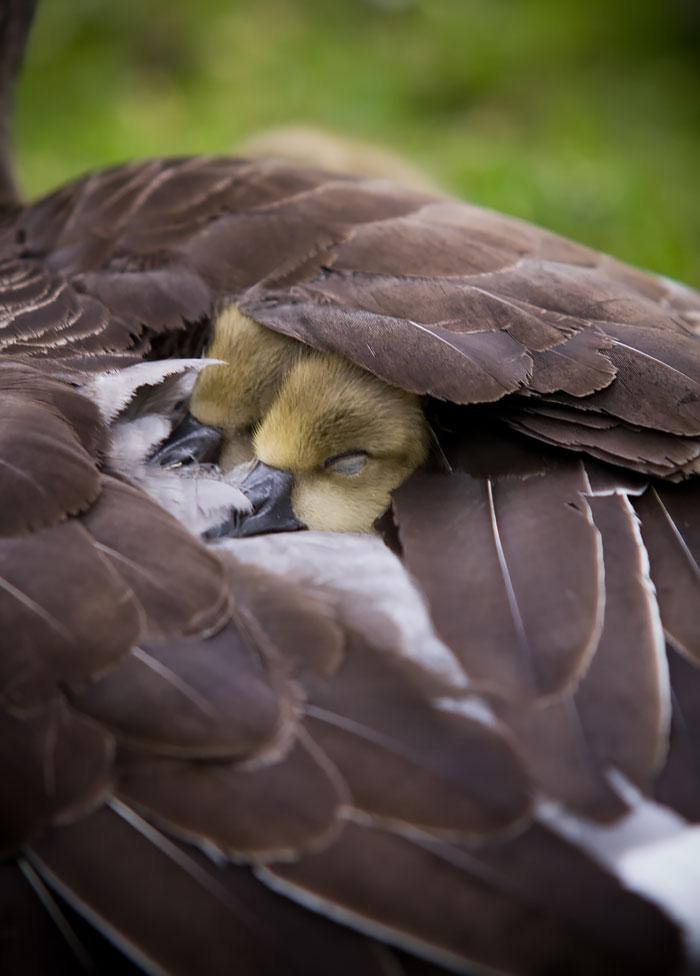 fotos tiernas de pajaros padres madres e hijos 12
