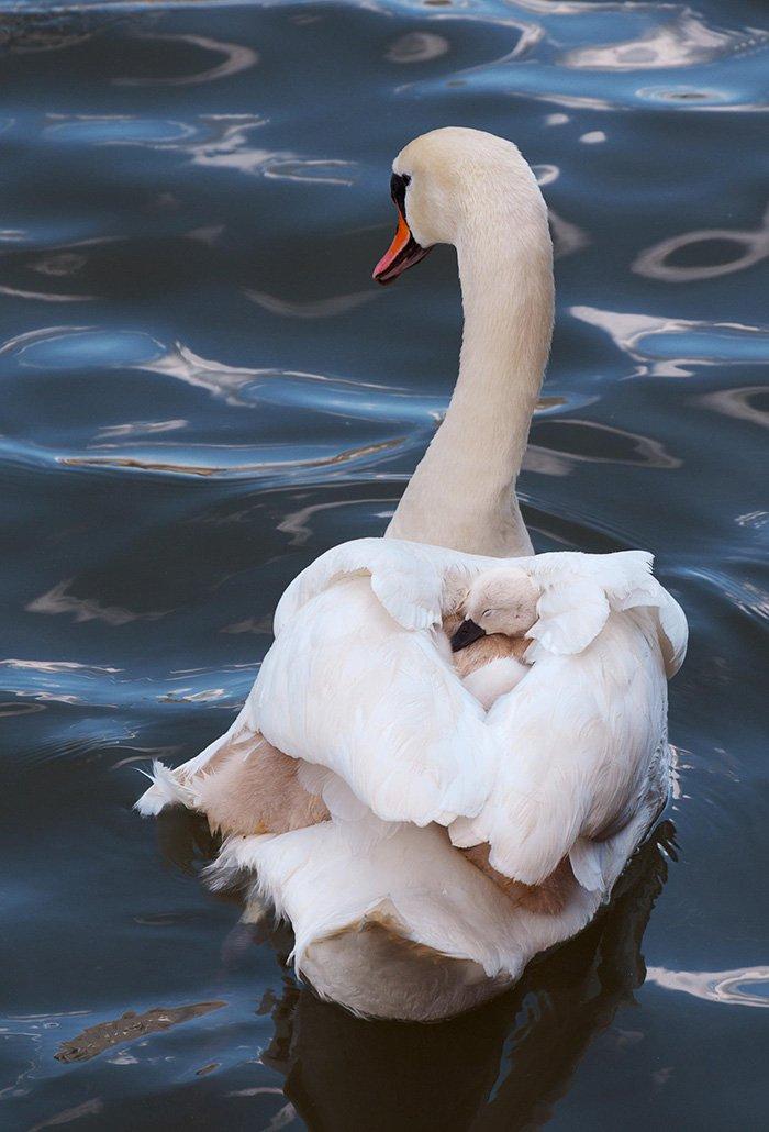 fotos tiernas de pajaros padres madres e hijos 13